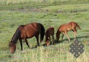 Для коневодов Тувы учредят государственную награду
