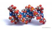 Генетики изучили ДНК народов Сибири