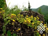 On mountain rocks. On summer mountain tops in Khakassia it is still a blossoming spring.