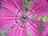 Андрей Монгуш. У Хан-Хухэй хребта, на цветках роса - ангелов слеза...