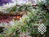 Т. Арчимаева. Роса, выпавшая после густого тумана (на перевале Даштыг (Соругский хребет, Тоджа))