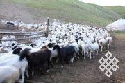 Вышла в свет книга об общинном управлении пастбищами в Кыргызстане