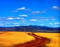 Под зеленым сукном пшеница не произрастает