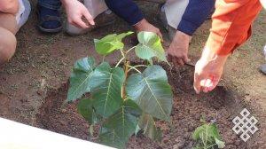 Буддисты всего мира посадили в Индии новое дерево Бодхи