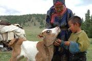 Глава Тувы намерен придать празднику животноводов «Наадым» государственный статус