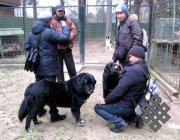 Тувинские студенты впервые увидели тувинских овчарок в Москве