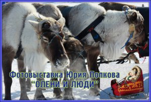Фотовыставка Юрия Попкова «Олени и люди» перекочевала на фестиваль
