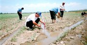 В Кызыле пройдет конференция «Актуальные проблемы ведения сельскохозяйственного производства в Аридной зоне Центрально-Азиатского региона»