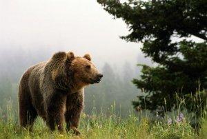 О культе медведя у тофаларов