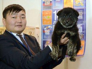 В Монгун-Тайге создан питомник по разведению тувинских сторожевых собак
