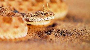 Змея в мифологии калмыков