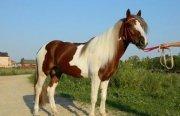 Российские ученые выяснили, как наши предки приручили лошадь